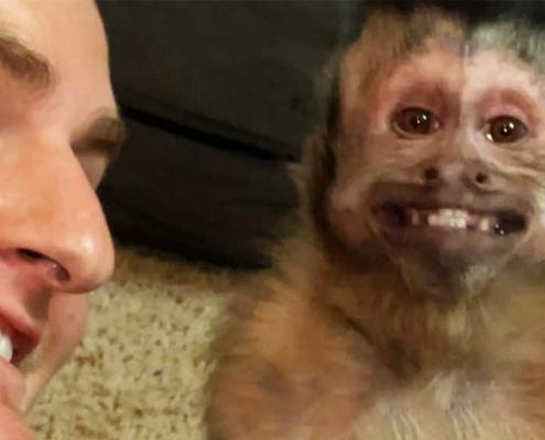 Tiktok : qui était george le singe ? Le primate célèbre sur internet meurt